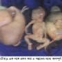 Natore Photo 2 (5 Child Birth ) 07.08.16 copy
