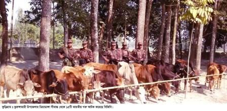 Kurigram Indian Cattle & Drug Recovered photo-(1) 24.01.17
