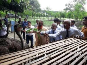 হাবিপ্রবিতে ব্যতিক্রমী সম্ভাবনার উটপাখির খামার